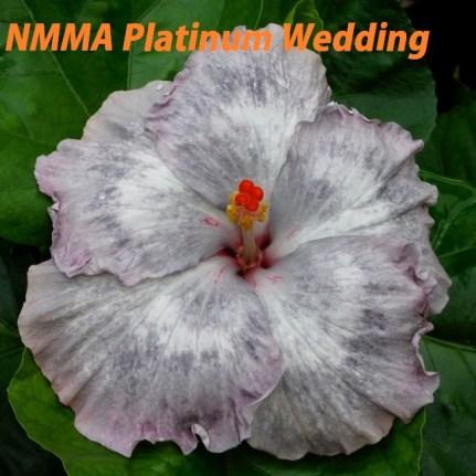 22 NMMA Platinum Wedding