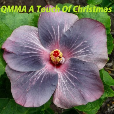 41 QMMA A Touch Of Christmas