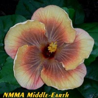42 NMMA Middle-Earth