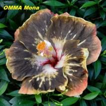 27 OMMA Mona