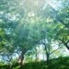 グリーンカーテンの選び方と種類そして初心者オススメの植物を紹介