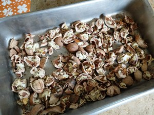 cracked shellbark hickory nuts in container