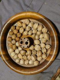 2020's tiny hickory nut harvest