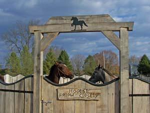 Photo-Horses_131