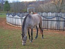 Photo-Horses_228