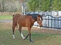Photo-Horses_235