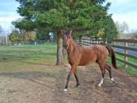 Photo-Horses_238