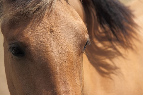 eyes_of_a_brown_horse_190289