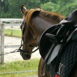 馬は優しくしてくれる人には穏やかな表情を見せてくれる!