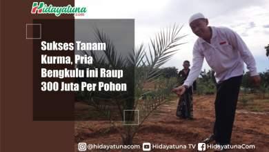 Photo of Sukses Tanah Kurma, Pria Bengkulu ini Raup 300 Juta Per Pohon