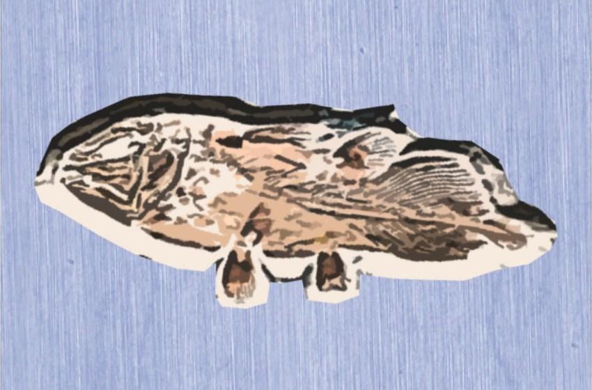 Berusia 66 Juta Tahun, Fosil Ikan Purba Ditemukan di Maroko