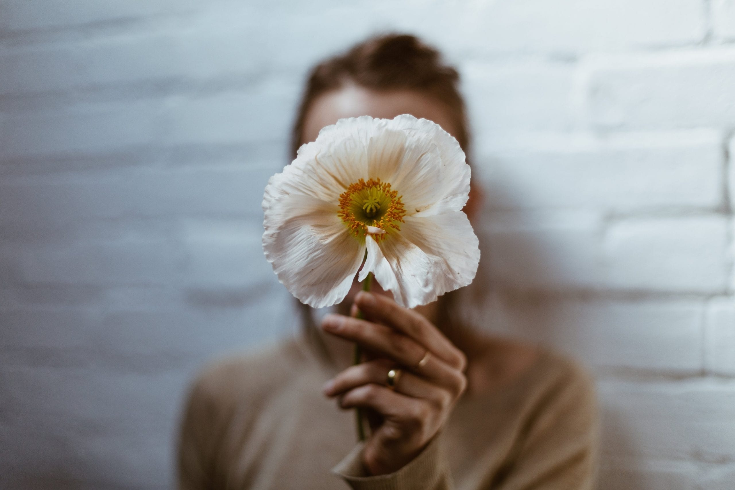 person holding white poppy in hand