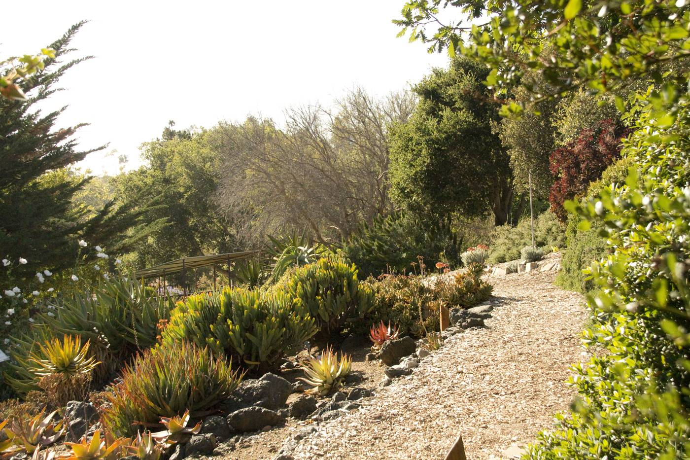 Explore one of SLO counties beautiful botanical gardens right off ...