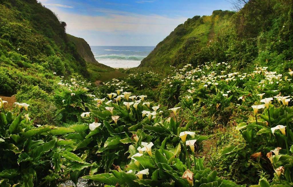 Calla Lily Trail