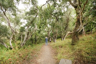 Black Hill Trail is a beautiful hike overlooking Morro Bay in San Luis Obispo. Make your way through eucalyptus and oak groves to a gorgeous panoramic view!