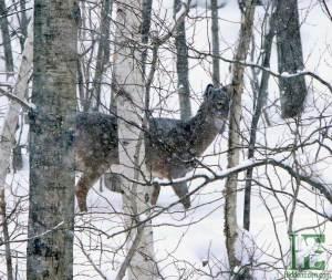 deer in snow in downtown Huntsville