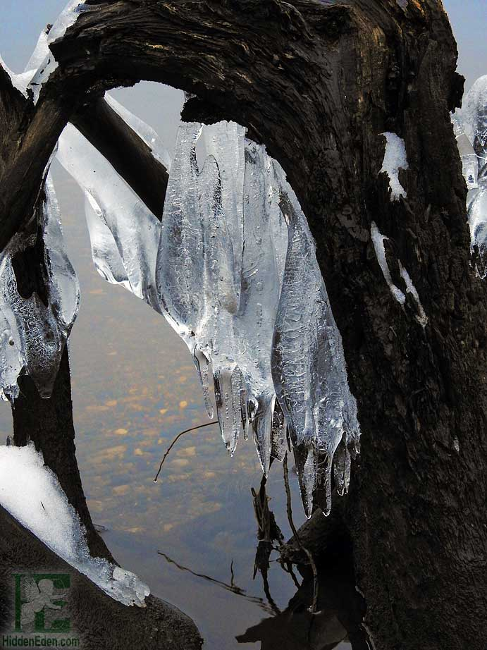 Ice Framed in Driftwood on Lake Muskoka