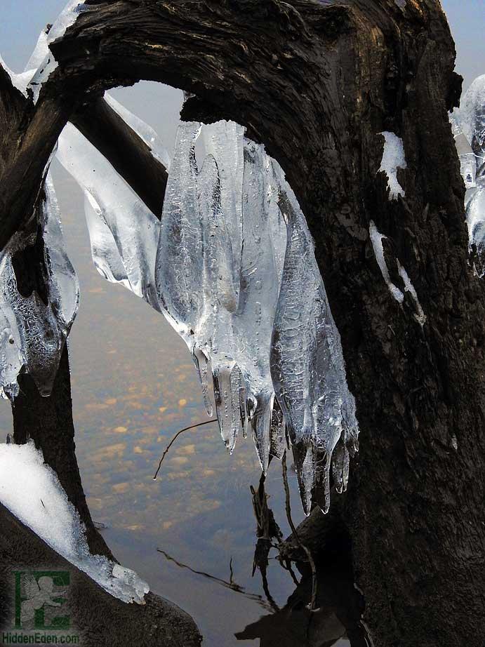 ice framed in driftwood on Lake Muskoka
