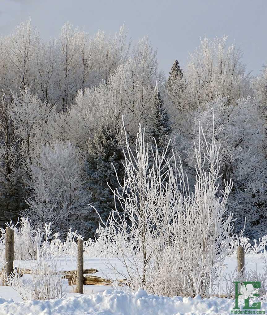 Muskoka shades of frost in trees