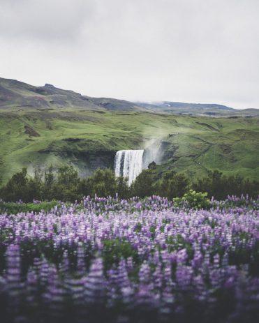 Skógafoss in Summer   Hidden Iceland   Photo by Norris Niman