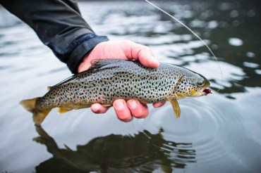 Volcano Lake Catch | Fly Fishing Tour | Hidden Iceland
