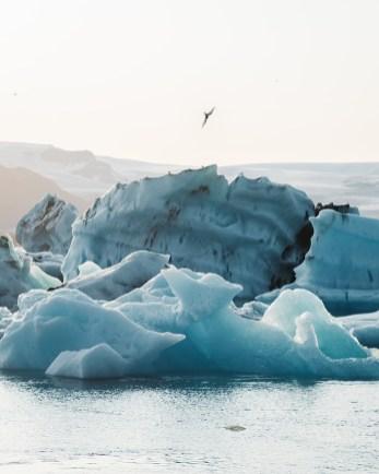 Icebergs floating on Jökulsárlón