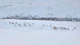 Authentic Iceland   Winter Stay   Living with Locals   Wilderness Center   Hidden Iceland