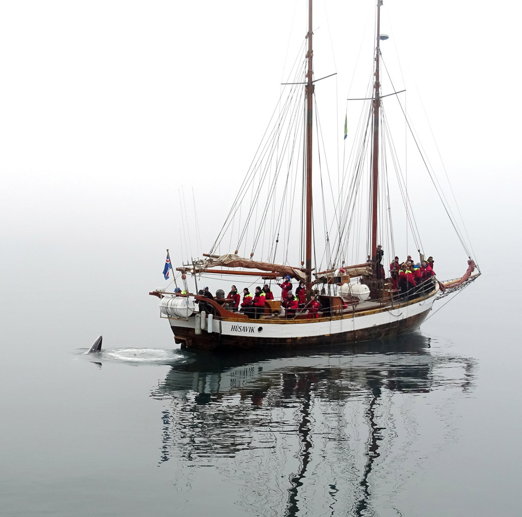 Whale Watching   Hidden Iceland   Photo North Sailing