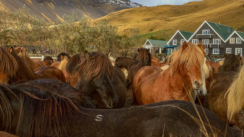Horse Riding | Team | Farm | Hidden Iceland | Photo Skálakot