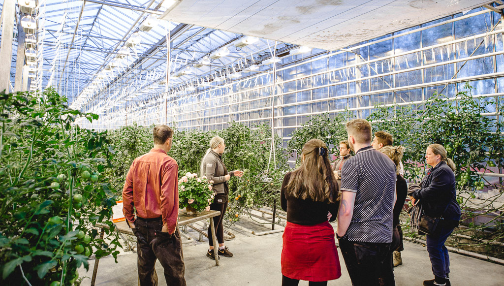 Friðheimar Greenhouse Farm Lesson | Golden Circle: Platinum Tour | Hidden Iceland | Photo Kat Craats