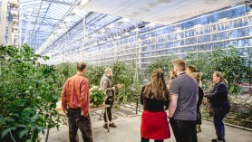 Friðheimar Greenhouse Farm Lesson | Golden Circle: Platinum Tour | Hidden Iceland | Photo Kat Craats