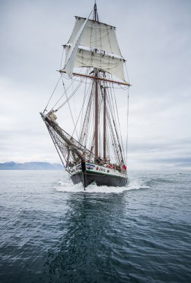 Whale Watching | Hidden Iceland | Photo North Sailing