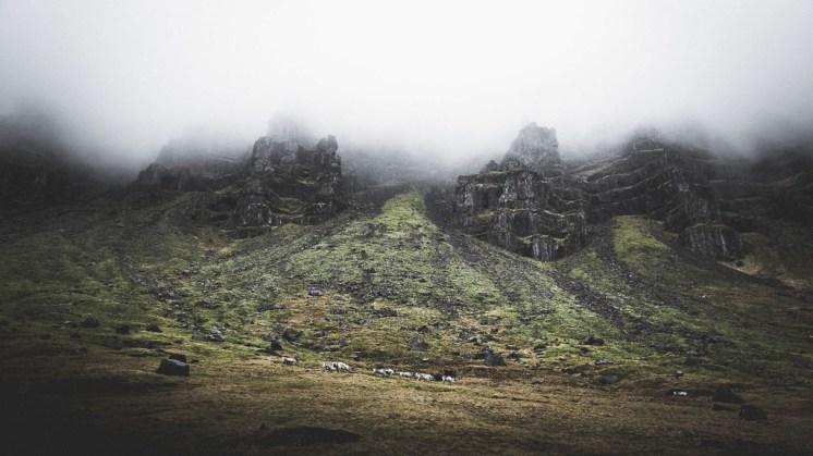 Eastfjords Reindeer | Hidden Iceland | Photo Norris Niman