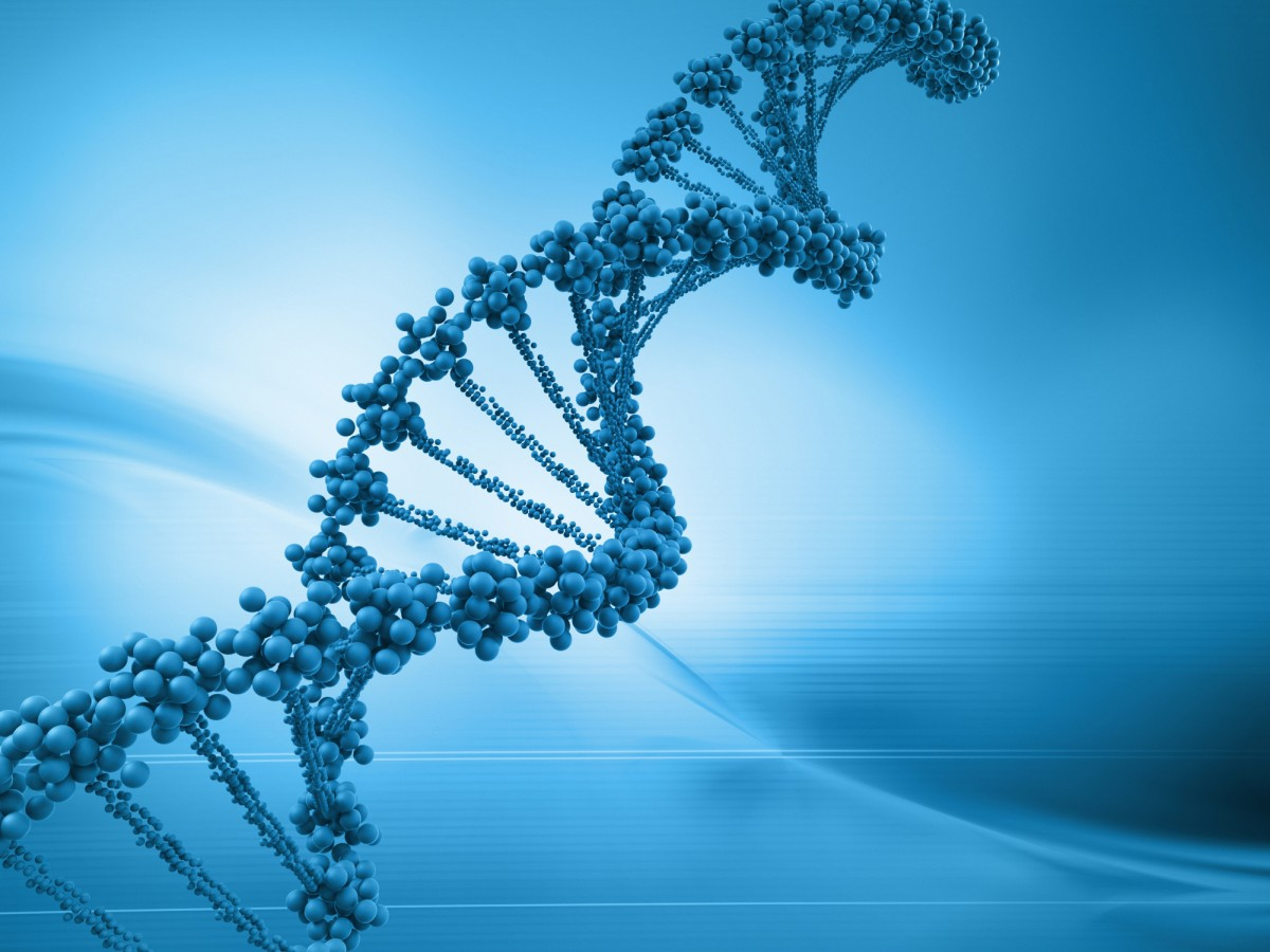Initial Dna Results For The Testing Of Peruvian Elongated