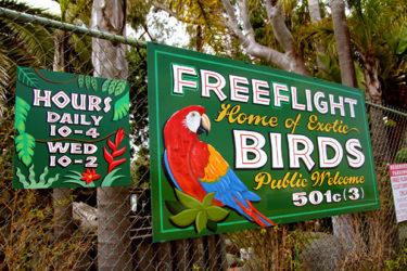 Free Flight Exotic Bird Sanctuary (16)