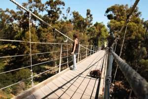 Spruce St. Suspension Bridge