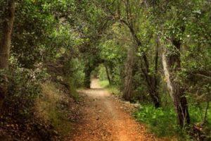 pq trans trail