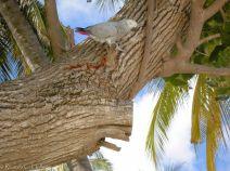 Haustier auf einer Palme