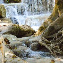 Wasser, Wurzeln und ein Hund