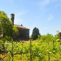 Weinanbau auf Torcello
