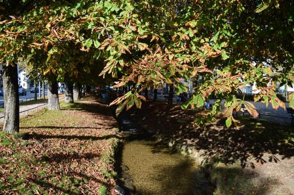 Hachinger Bach im Herbst