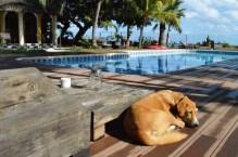 Der Haushund der Villa Anakao Mauritius