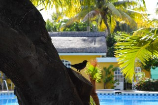 Idyllische Natur der Villa Anakao Mauritius