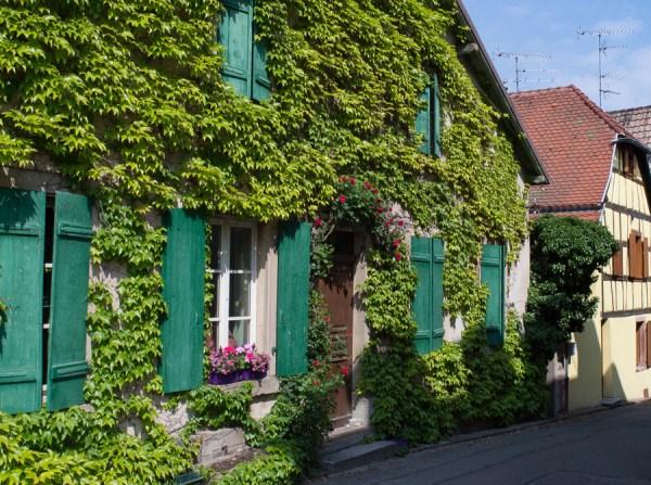 Zugewachsenes Haus in Riquewihr