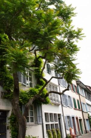 Haus mit Baum in Kleinbasel