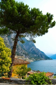 Pine Tree above Lake Garda