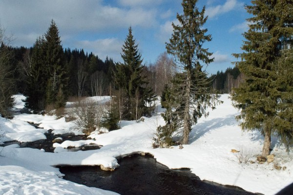Šumava near Modrava in winter