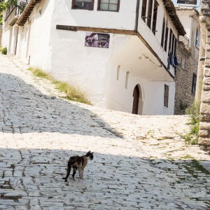 Cat in Berat Albania