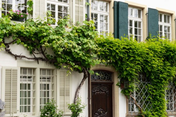 House and wine in Basel