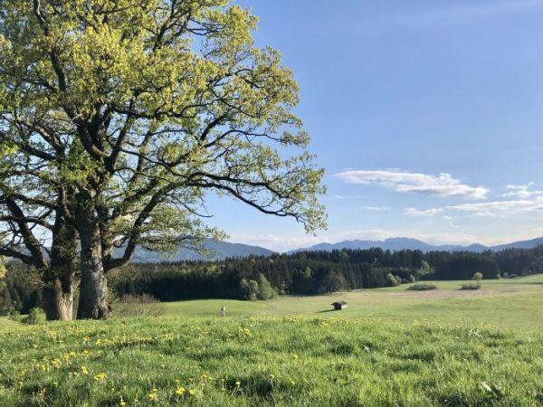 walk in Sachsenkam